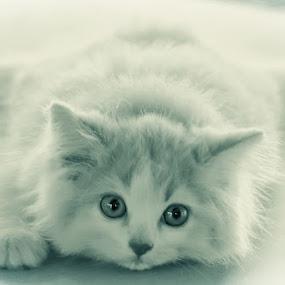 Embrace by Aditya Nugraha - Animals - Cats Portraits ( cat )