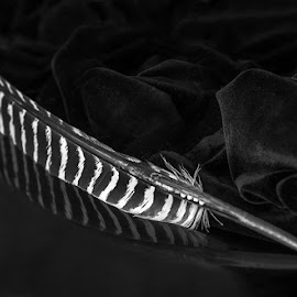 Feather  by Phyllis Plotkin - Artistic Objects Other Objects ( reflection, black and white, contrasts, feather, chiaroscuro )