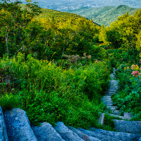 Pathway Down Greylock by Jason Weagle - Landscapes Mountains & Hills ( hdr )