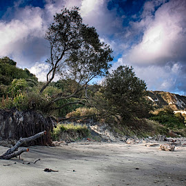 Cretaceous Shore by Dave Godden - Landscapes Beaches ( clay, shore, cliffs, kent, cliff, sea, east wear bay, beach, rotational, warren, geology, folkestone, slumping, chalk, cretaceous, tree, bay, trees, east, wear )