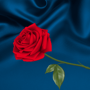 Blue Rose Silk Love