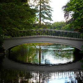by Edwin van Rossen - Buildings & Architecture Bridges & Suspended Structures ( water, park, ducks, summer, bridge, pond )
