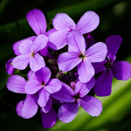 Purple Flowers by Dave Lipchen - Flowers Single Flower ( purple flowers )