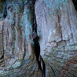 Nail by Magnus Stridh - Buildings & Architecture Architectural Detail ( detail, nail, wood, old tree, unedited )