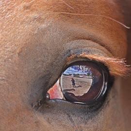 Best eye reflexion... by Rose Smith - Animals Horses ( of, horse, beautiful, a, best, reflexion, eye )