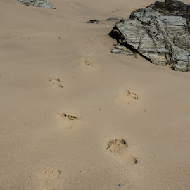 They walked side by side  by Jo Darlington - Nature Up Close Sand