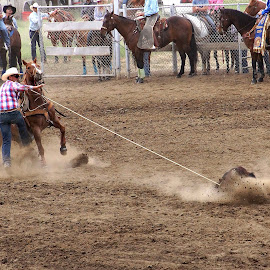Calf roping by Gaylord Mink - Sports & Fitness Rodeo/Bull Riding ( horse, calf, rope, rodeo, dust )