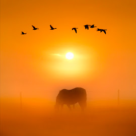 Morning Silhouettes by Adrian Campfield - Landscapes Sunsets & Sunrises ( clouds, horses, white, wildlife, yellow, ornage, birds, equines, flight, foggy, dawn, sky, red, nature, wings, amber, silhouettes, weather, sunrise, gold, geese, misty, black )