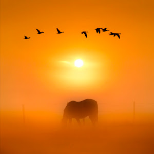 Silhouettes of Nature.jpg