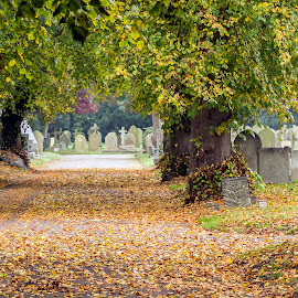 Cemetery in Autumn by Adele Price - City,  Street & Park  Cemeteries ( autumn, churchyard, cemetery, gravestones, pathways, leaves )