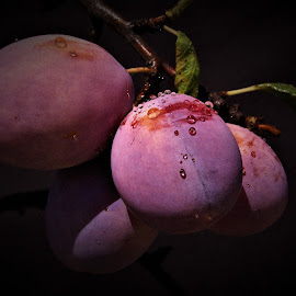 wet plums by Cosimo Resti - Food & Drink Fruits & Vegetables ( plums, wet, dark, purple, trees )