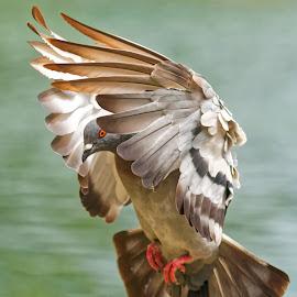 Bird 98563 by Raphael RaCcoon - Animals Birds (  )