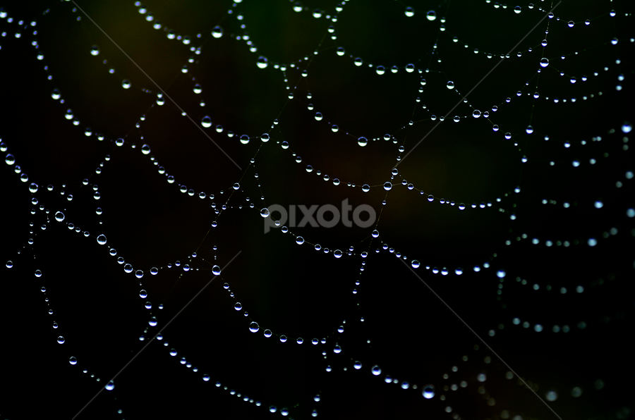 dark night.. by Pete G. Flores - Nature Up Close Webs ( macro, drop, night, lines, web, circle, spiderweb )