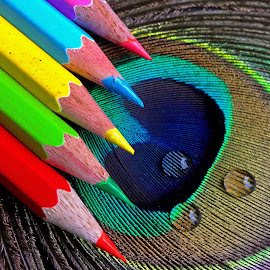 Pencil by Asif Bora - Artistic Objects Education Objects