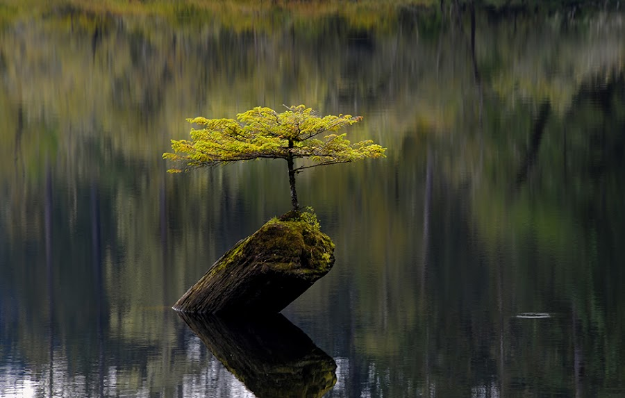 The little tree that could by Sally Halvorsen - Landscapes Forests ( ferry lake,  lake,  tree )