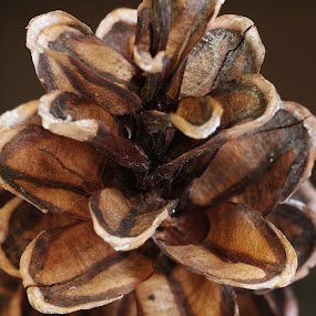 Shades of brown by M.H. O'Dell - Nature Up Close Other Natural Objects