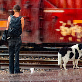 A dog and his faithful companion. by Adrian Ramirez - People Street & Candids ( stormy, train tracks, rainy, raining, monsoon, companion, train, wet, union pacific, tracks, dog, storm, rain )
