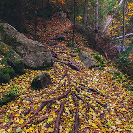Autumn leafs by Nikolay Shopov - Landscapes Forests ( pines, beautiful autumn, mountain, root, moss, travel, yellow, canyonofwaterfall, leafs, autumn, path, trip, wildnature, bulgaria, wild, colors, 2015, green, beautiful, forest, smolyan, beautiful nature, red, beautifull, rhodope, wild nature, stones )