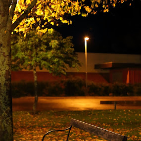 A Bench In Autumn by Sami Rahkonen - City,  Street & Park  City Parks ( parking lot, tree, nature, bench, park, autumn, beautiful, artistic, trees, park light, leaf, leaves )