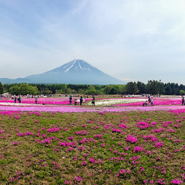 Fuji Shibasakura Festival by Tina Lim - Landscapes Prairies, Meadows & Fields ( mt. fuji, japan, mountain, pink moss, pink, flower festival, shibasakura, flowers )