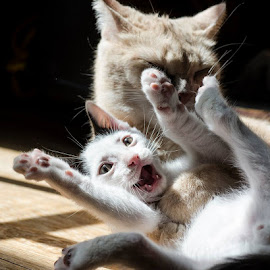 Cleaning Time by Jude Walton - Animals - Cats Playing