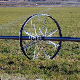 Frost in the field by Ann Rainey - Artistic Objects Industrial Objects ( farm, cold, ice, frost, icecycles, filed )
