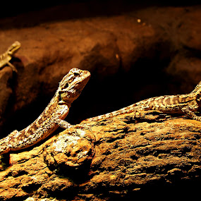 Reptile Family by Mike Mills - Novices Only Wildlife