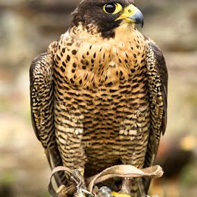 ... by H. B. - Animals Birds ( bird, animals, birds )