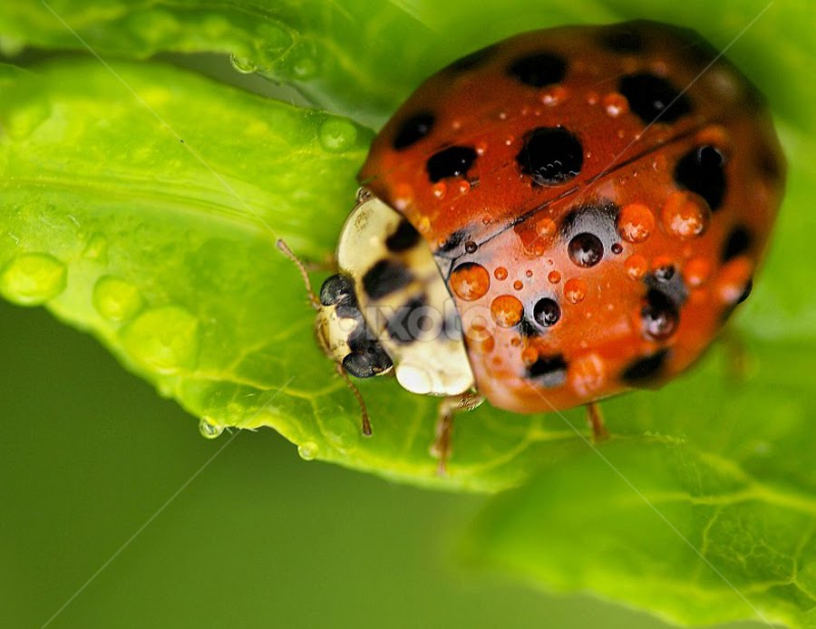 Raindrops and... by John Larson - Animals Insects & Spiders (  )