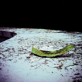 Long and Lonely road by Gareth  Evans - Instagram & Mobile iPhone ( nature leaf decay outdoors )