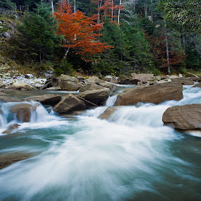 Different by Catalin Palosanu - Landscapes Forests ( water, mountain, tree, autumn, forest, rocks, red tree )