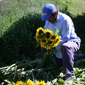 Man and flowers by Cristobal Garciaferro Rubio - People Portraits of Men ( field, sunflowers, sunflower, coutry man, man )