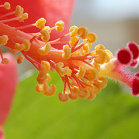 by Anudeep Nethi - Nature Up Close Flowers - 2011-2013