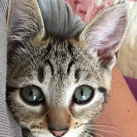 Odace by Dobrin Anca - Animals - Cats Kittens ( play, kitten, green, cat )
