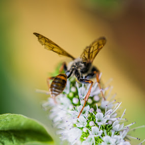 Wasp on Mint Leaf by Mat Hockett - Animals Insects & Spiders