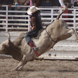 Bull by Lynn Clemons - Sports & Fitness Rodeo/Bull Riding