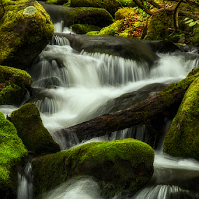 spring cascade by Ernie Page - Landscapes Waterscapes ( water, great smoky mountain national park, national park, nature, silky water, flowing water, cascade, landscapes, spring,  )