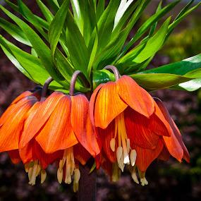 by Eduard Andrica - Flowers Flower Gardens (  )