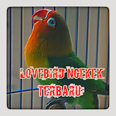 App MASTER LOVEBIRD NGEKEK apk for kindle fire