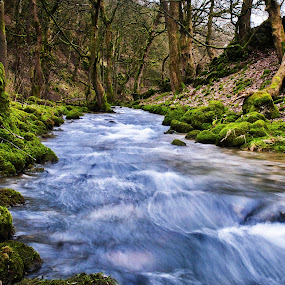 Beck  by Josh Hilton - Landscapes Forests ( moss, forest, beck, mossy, river )