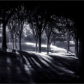 Serenity – Timeless by Satyaki De - City,  Street & Park  City Parks ( calm, b&w, park, serenity, timeless, white, black, city )