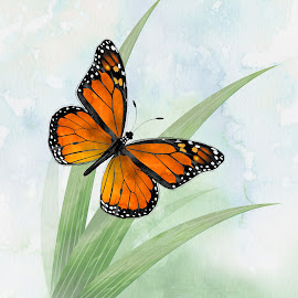 Monarch by Charlie Alolkoy - Illustration Animals ( watercolor, butterfly, fly, grass, monarch, bug, insect )