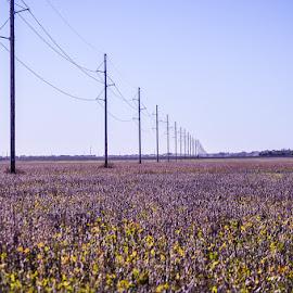 farmland by Kayla House - Landscapes Prairies, Meadows & Fields ( countryside, farm, farmland, flowers, country, fields,  )