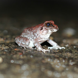 by Anuj Patil - Animals Amphibians