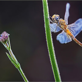 elegance by Leon Pelser - Animals Other ( 1/160, f 2.8, iso 500, tripod, auto wb,  )