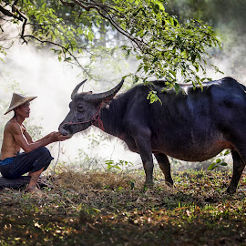 Asian farmer and his buffalo in Thailand by Pitakchatr Thepracha - People Street & Candids ( countryside, laos, thailand, farmland, thai, hat, asian, beast, love, mud, farmer, nature, indonesia, lifestyle, cambodia, wild, grass, agriculture, happiness, heavy, health, mammal, rural, strong, big, culture, calm, tropical, wildlife, breathing, farm, bond, happy, tradition, asia, relationships, man, buffalo, world environment day, green, beautiful, muscle, vietnam, scenic, field, myanmar, fog, summer, harvest, nose )