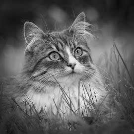 by Jane Bjerkli - Black & White Animals