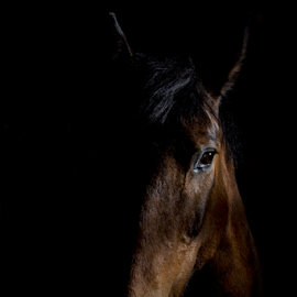 Easter by Mark Helm - Animals Horses ( equine, art, horse, head, print )