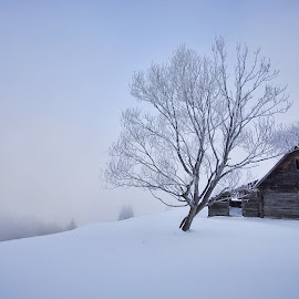 Lonely and cold by Cristian Nicula - Landscapes Weather ( isolated, winter, tree, fog, snow, frost, house, untouched, mist )