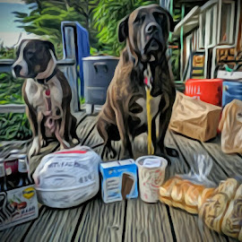 Home from the market by Ken Danieli - Animals - Dogs Portraits ( dogs, pitbull, oil, beer, pet, seafood, bread, outdoors, lemonade, summer, ice cream, puppy, sunshine, vermont, oil art, shopping, turkey )